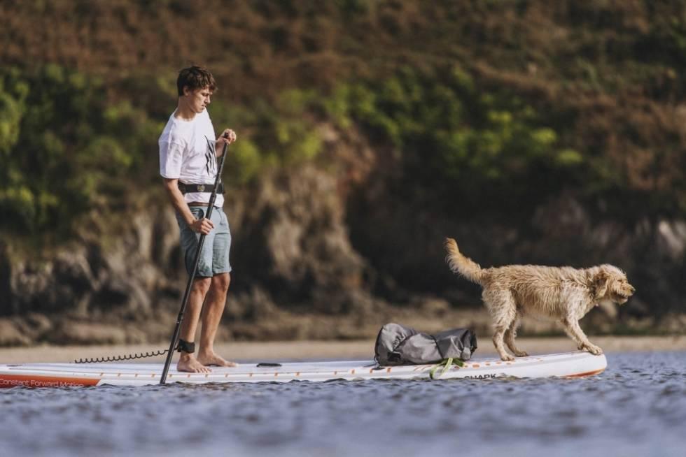 SHARK SUP med hund