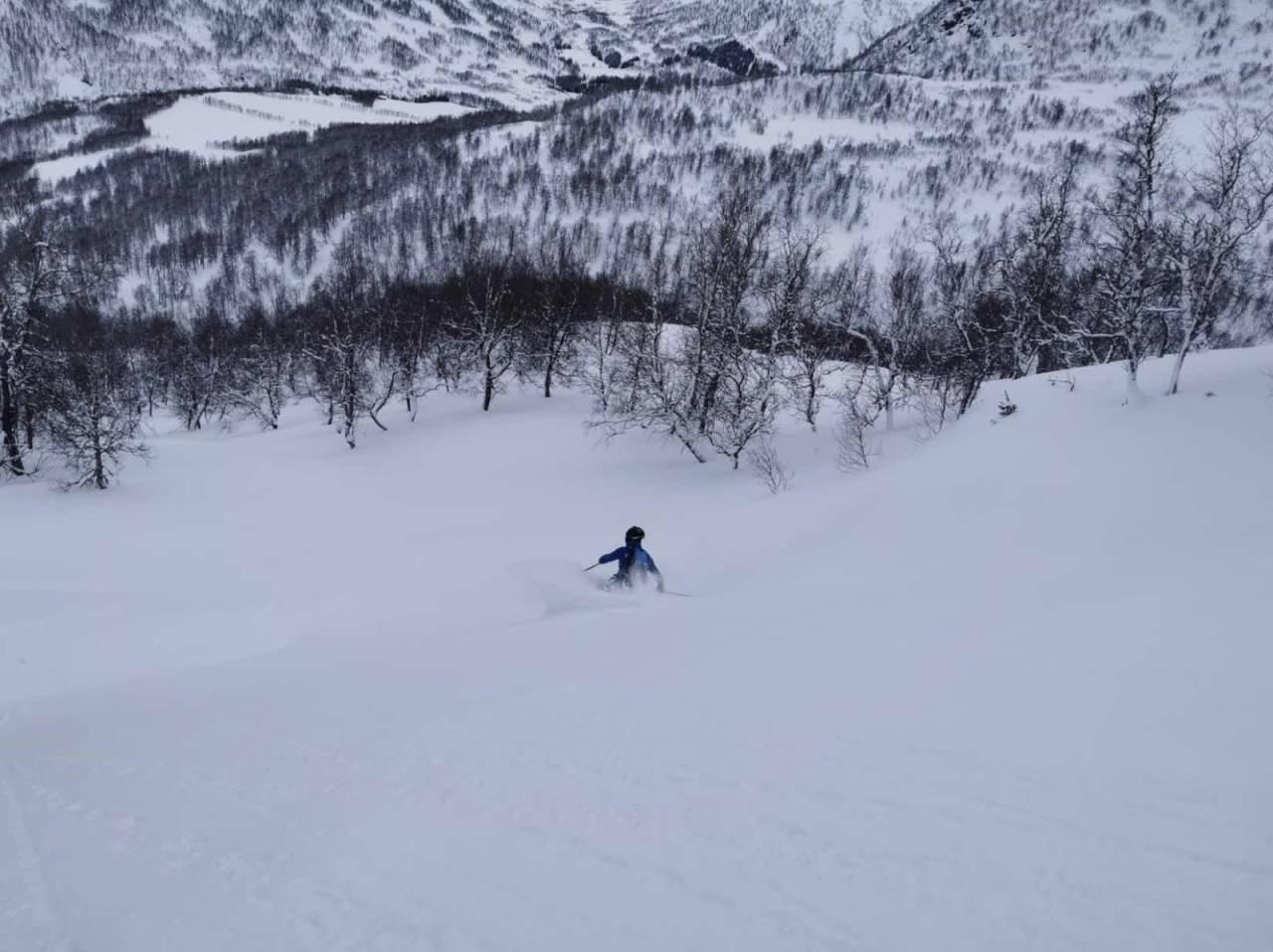 Skogskjøring Jordalen Voss Myrkdalen pudderkjøring