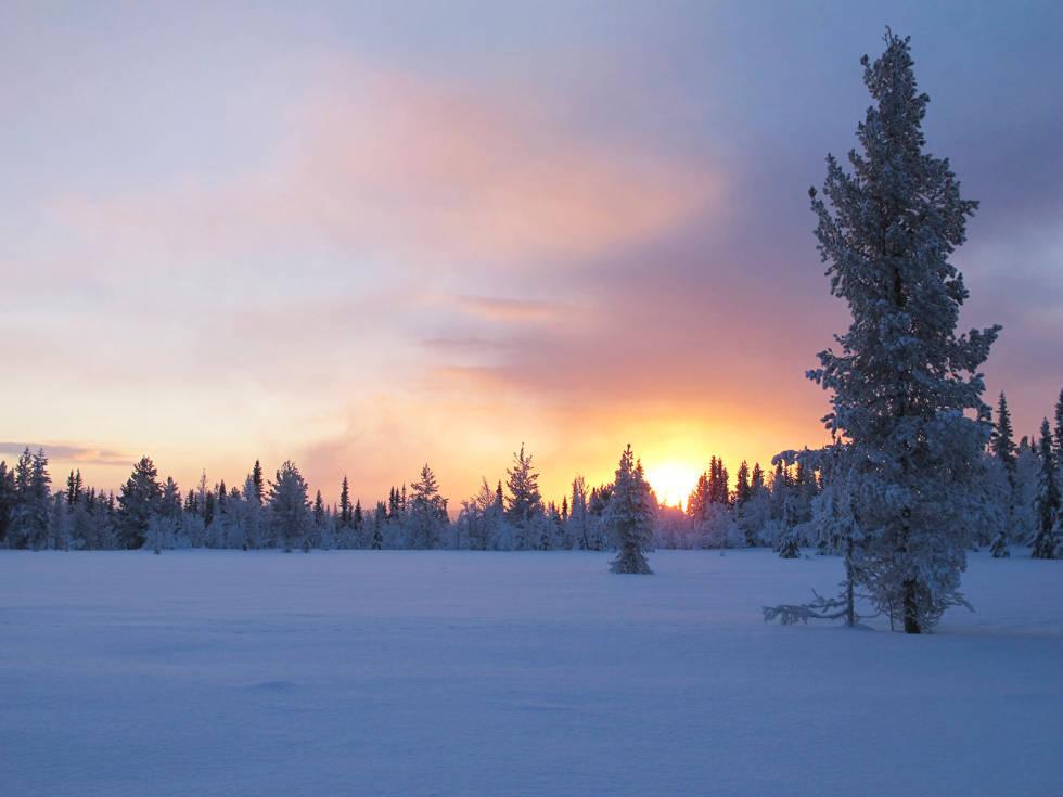 Skogsfugljakt-Tiur-Sverige-8