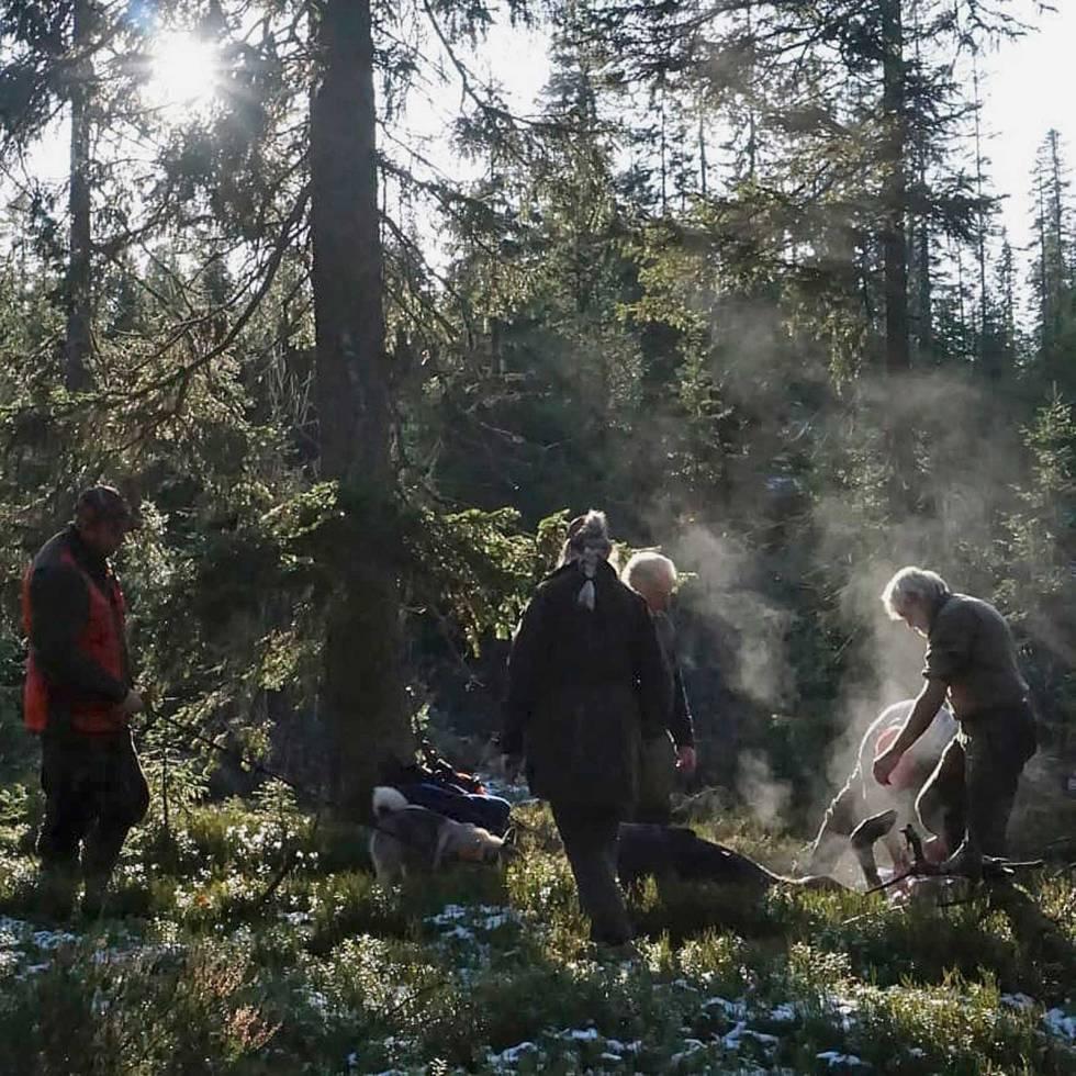 skogsjef