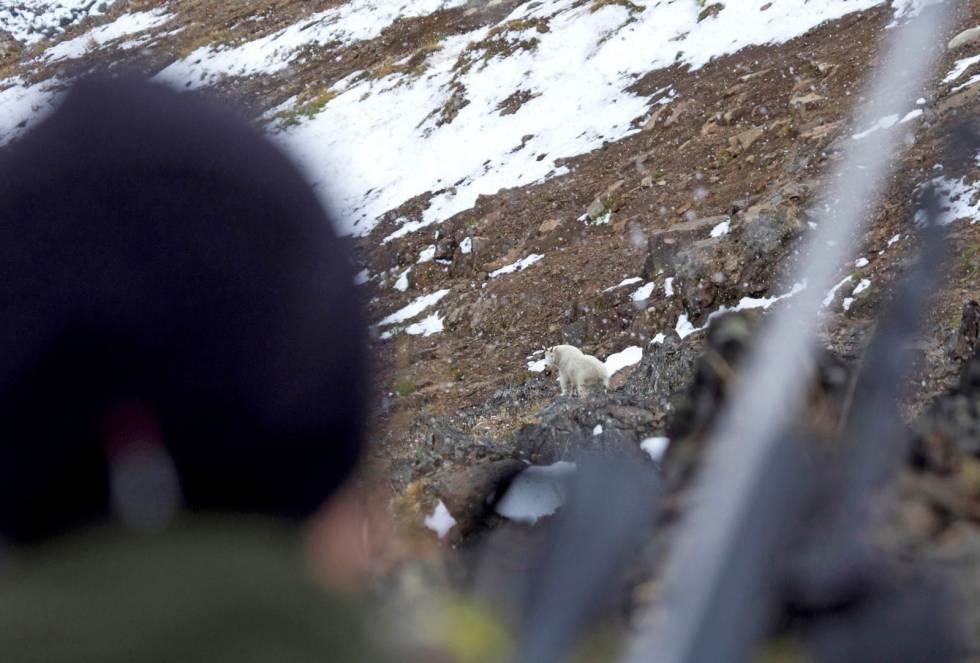 Snøgeit-jakt-i-Canada-4