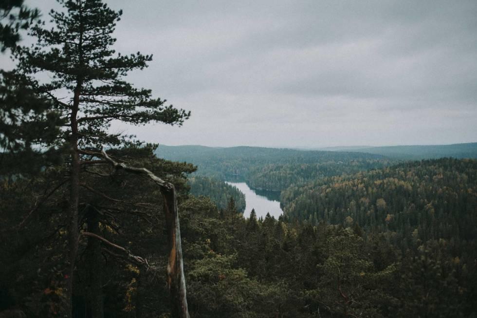 Mosjøen Østmarka
