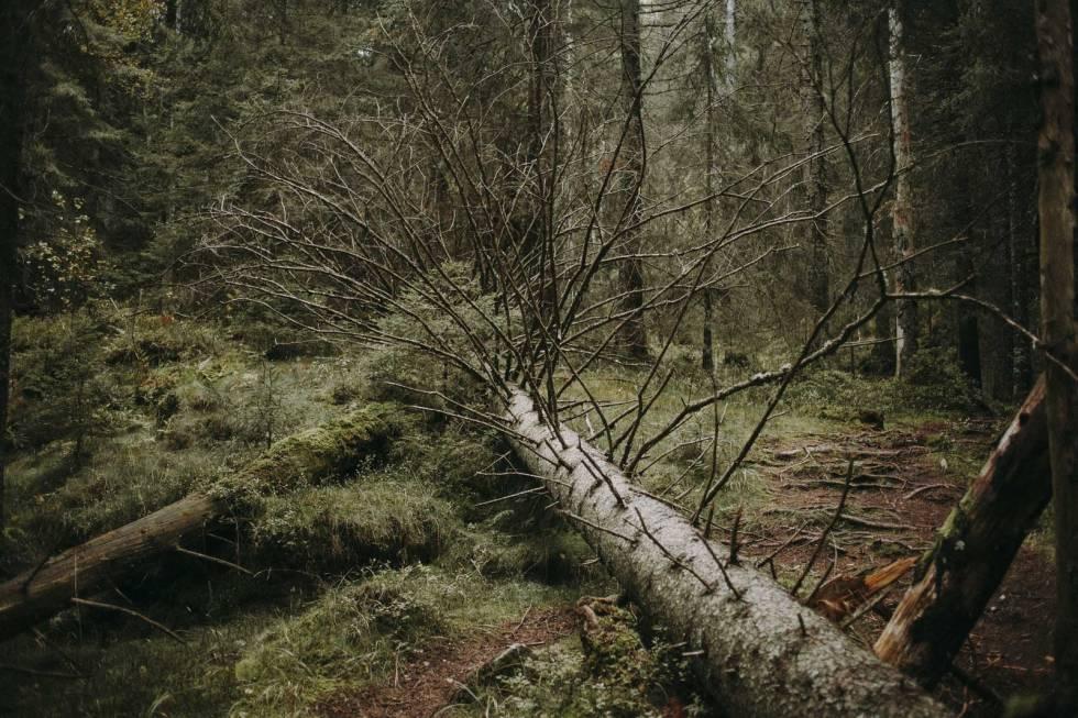 tonekollen-østmarka-turtips-0038