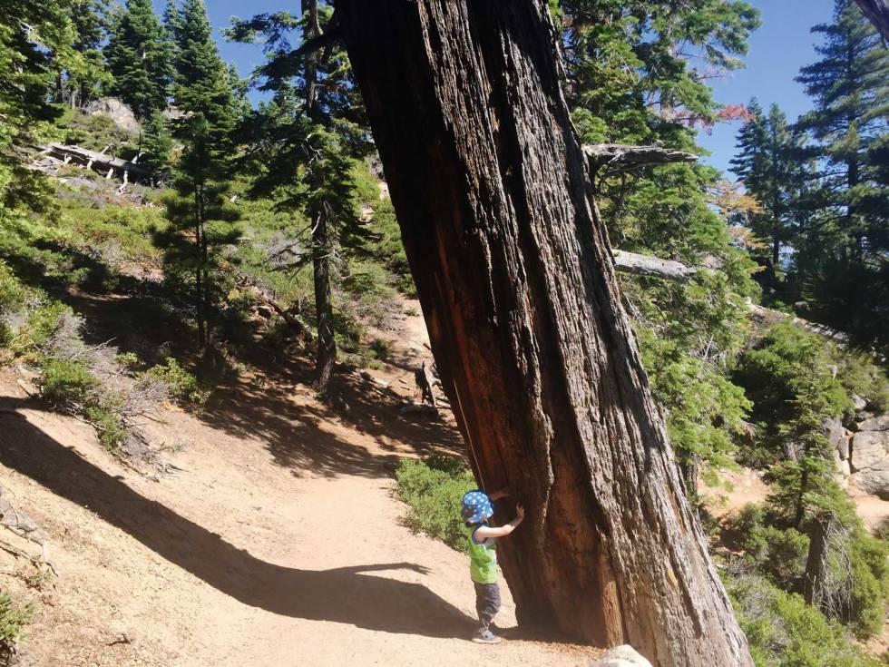 Tur-med-barn-California-Yosemite-8