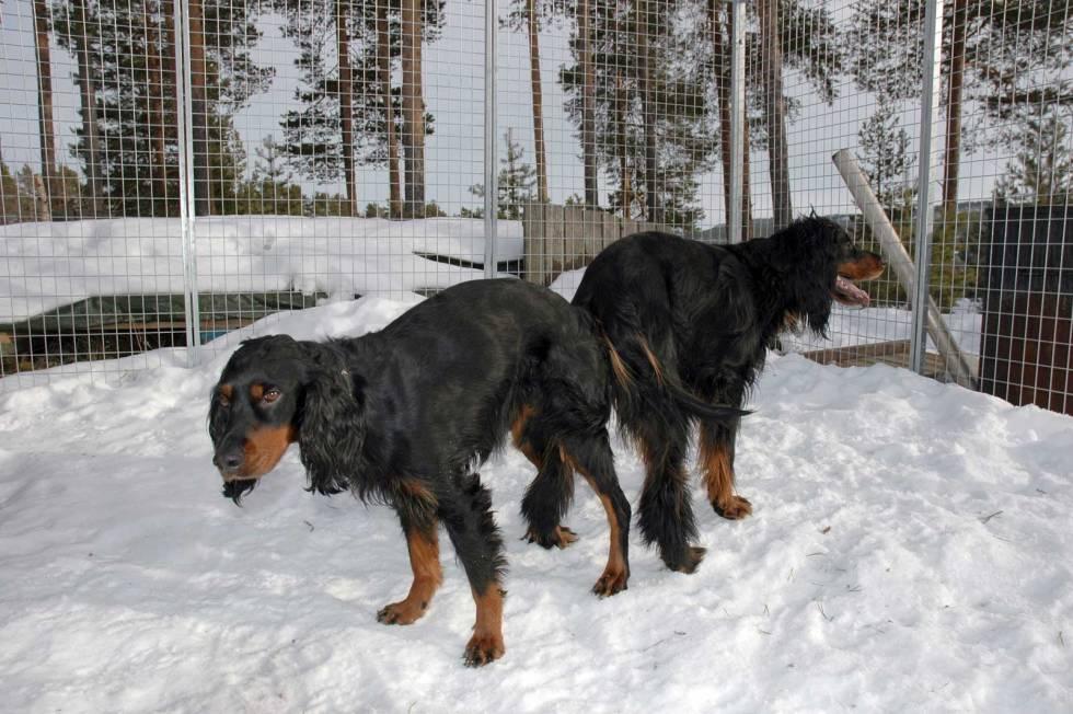 Valpeskolen-Jakthund-4