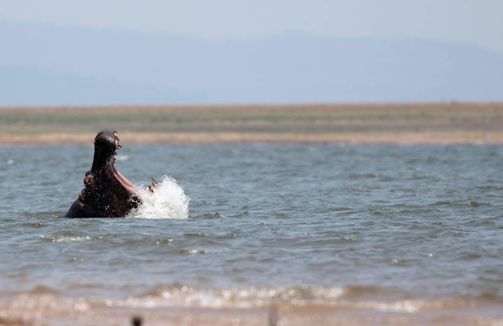 Verdens-største-åtejakt-Afrika-Flodhest-3