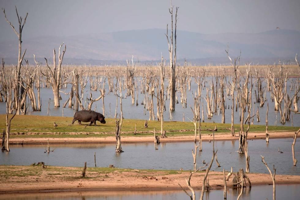 Verdens-største-åtejakt-Afrika-Flodhest-6
