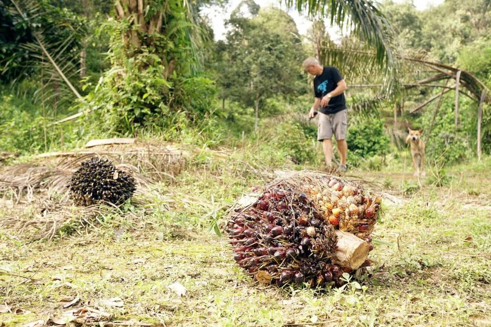 Villsvinjakt-i-Malaysia-3