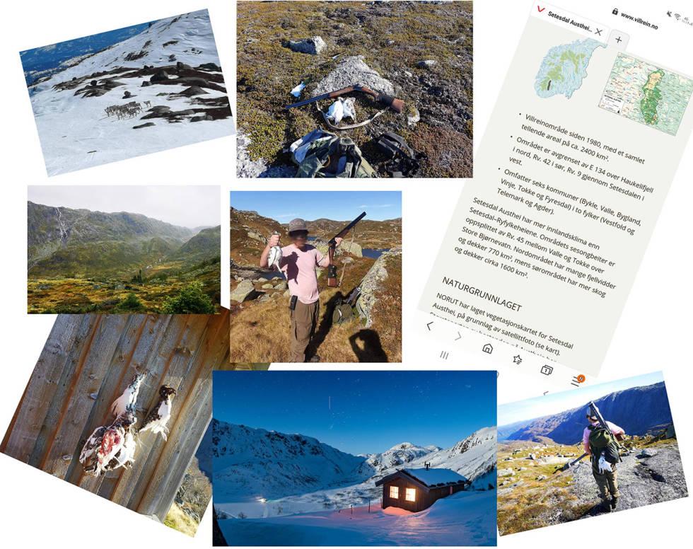 kollasje collage jaktterreng svindel telemark vinjerui