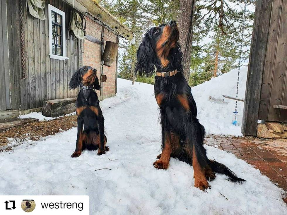 westreng