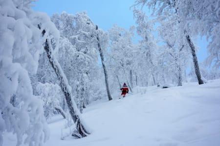 Skiing in winter wonderland